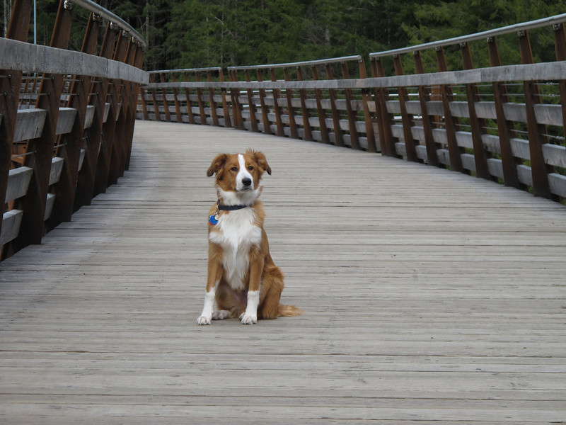 At the Kinsol Trestle, age 5 months.