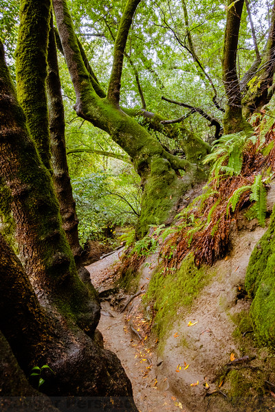 Lower Pack Rat Trail in the Tilden Natural Area