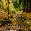 Trail along Wildcat Creek