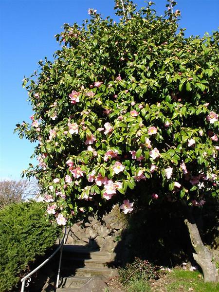 Knospiger Baum