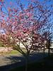 Der Frühling kommt nach Seattle