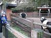 Tim und die Mini-Panda-Kühe