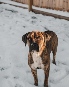 Jeffereson's First Snow