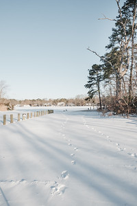 Footprints In The Snow At Upper Dam