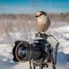 Watch the birdie!!