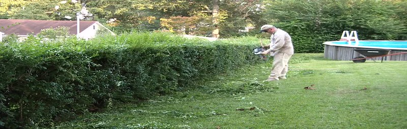 2009 Hedge Trim Time-Lapse