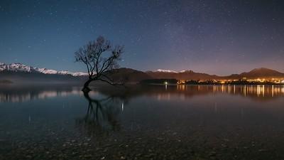 Wanaka Tree Stars