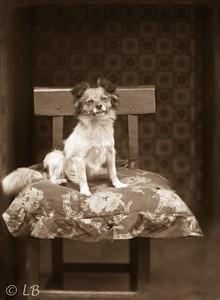 Dog on a cushion