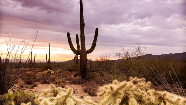Tucson Sunset - Saguaro National Park