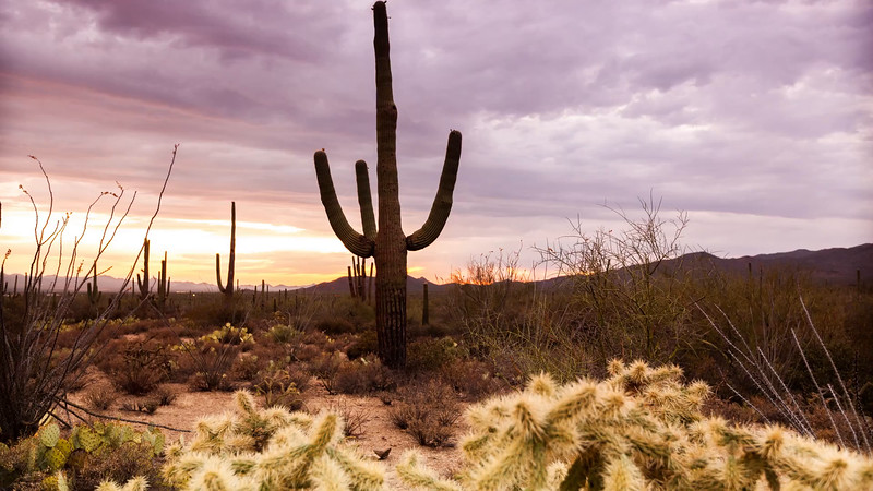 Tucson Sunset - Saguaro National Park