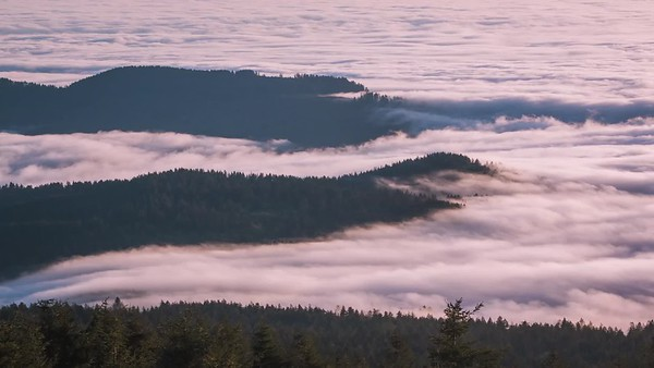 Rolling Fog on Mount Hebo
