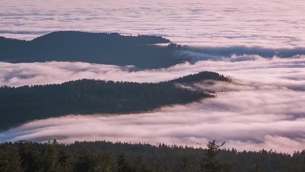 Rolling Fog on Mount Hebo