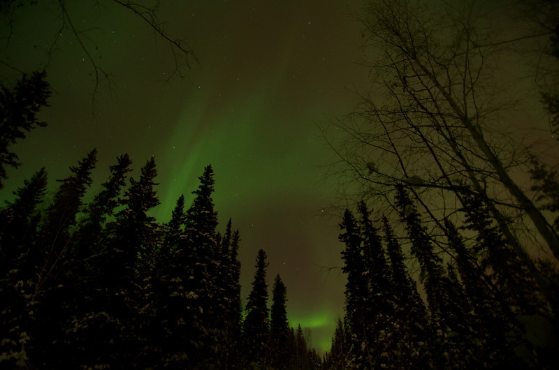 "This is a diffuse aurora display taken from Fairbanks, Alaska. It's fairly typical to walk outside late at night and see the sky this way. It doesn't have the brilliance that we get with many of the geomagnetic storms, but even so there were a few moments when real ""structure"" appeared.<br /> <br /> 6 s exposures with 7 s interval<br /> f/2.8<br /> Compiled at 18 fps"