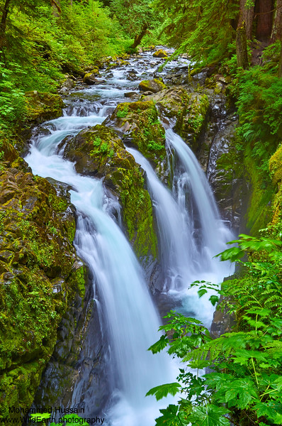 Sol Duc Falls ~ Olympic National Park, WA
