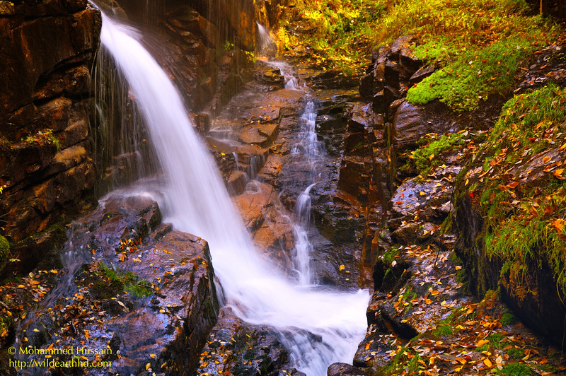 Flume Gorge - Avalanche Falls, Franconia Notch State Park, NH