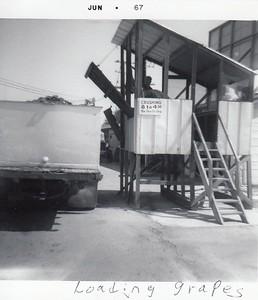 Loading grapes 1941