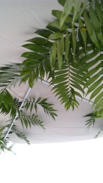 The palm leaves in the roof