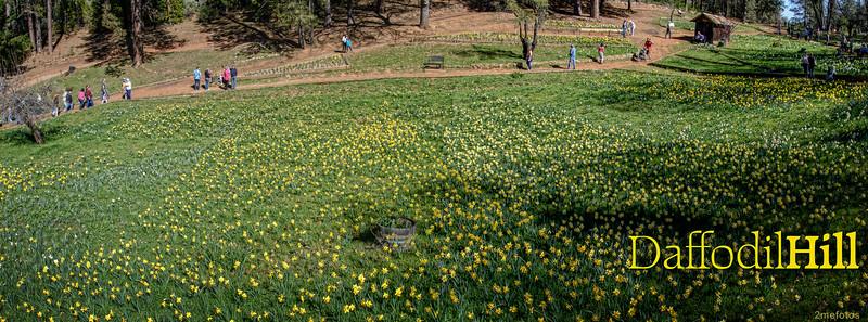 Daffodil Hill, Ca