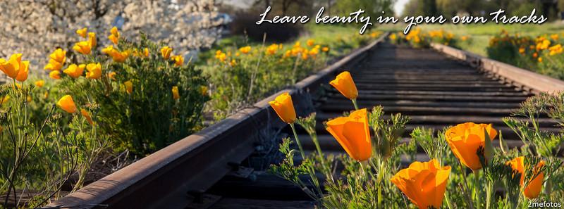 Beautiful Poppy Flowers and Railroad Tracks