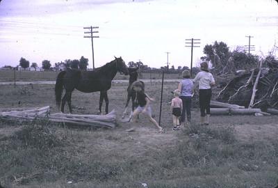 19640601_kansas_horses2
