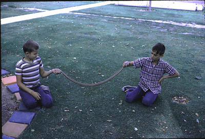 Gary and Ray administer a chiropractic treatment to a gopher snake