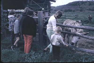 19660106_feeding_mules_at_l