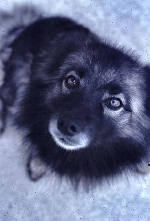 19690601_lindas_dog_greta_2
