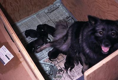 greta and her pups