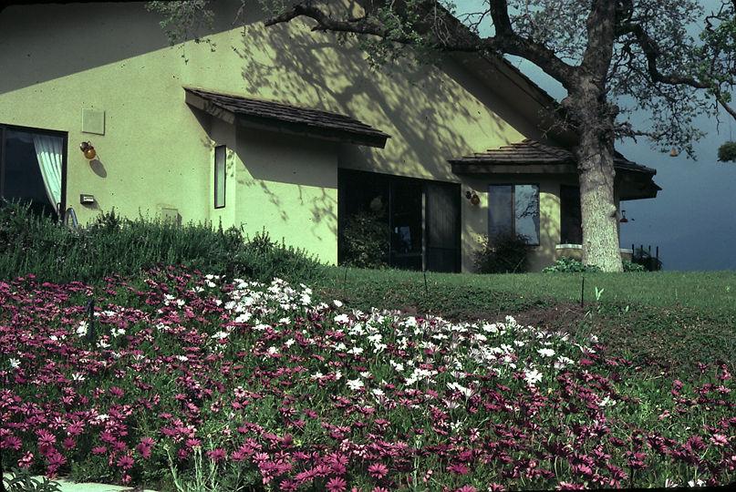 cosentines house