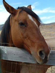 Horse at Bridgecreek Ranch, San Luis Obispo, California