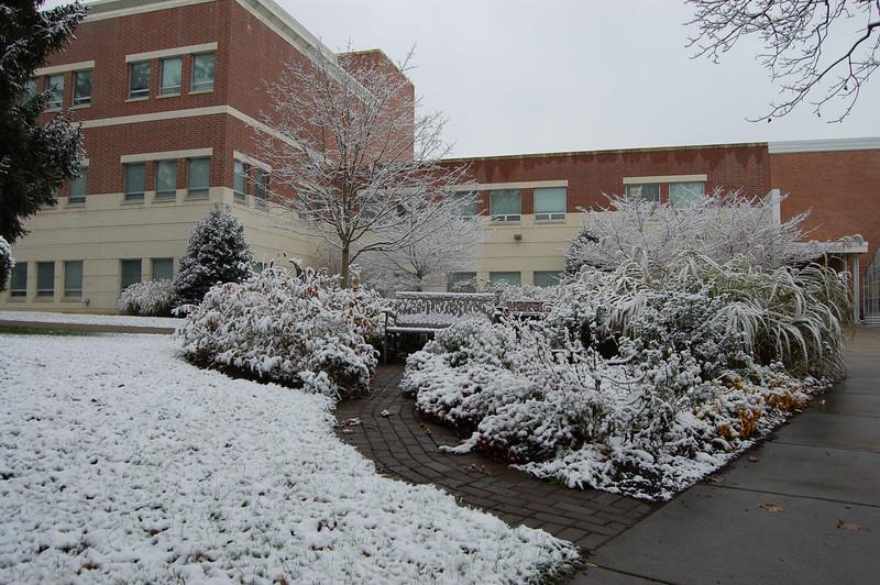 Snow at Roddy