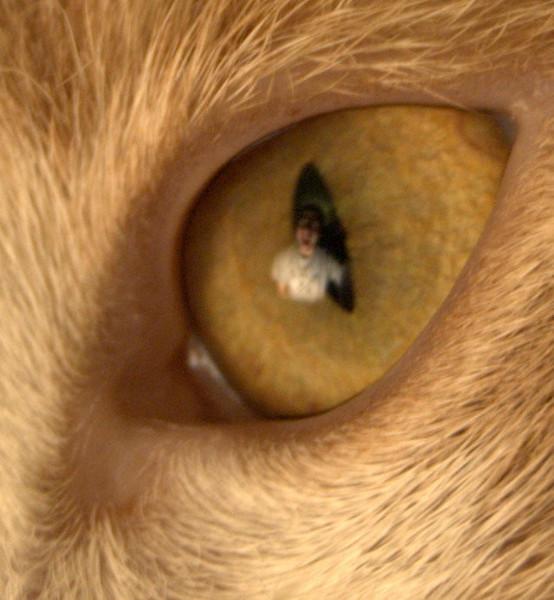 Self reflection in a cat's eye