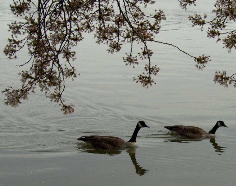 Goose Date