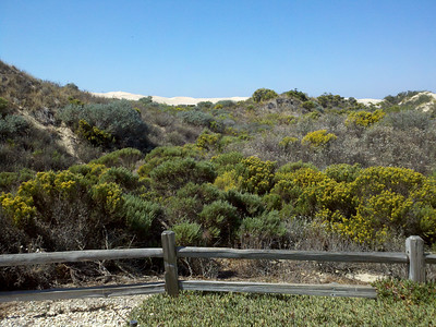 September day at Oceano Dunes, CA. Just about as perfect as it can get.