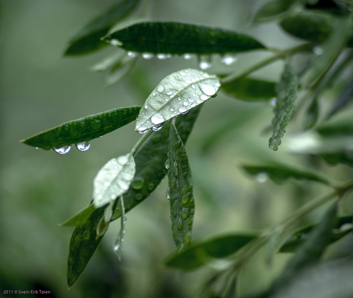 Spring rainstorm I - Kato Stalos