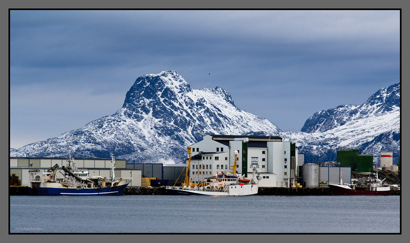 Loading off <br /> Fishing vessels delivering the catch, Bodø