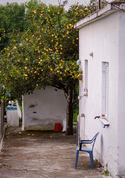 Lemon tree and chair - Kirtomados