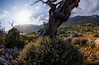 Landscape with trees II - by Loutro
