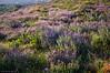 Thyme hill, Kato Stalos