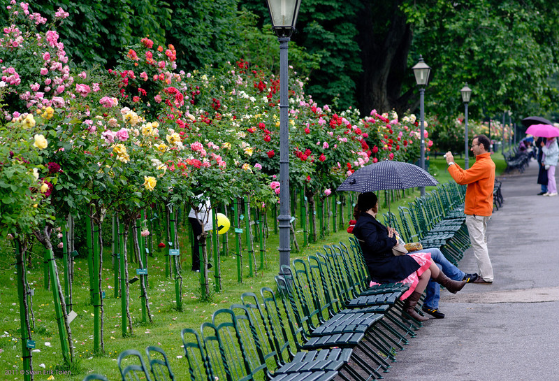 Capturing the roses<br /> Volksgarten - the rose park