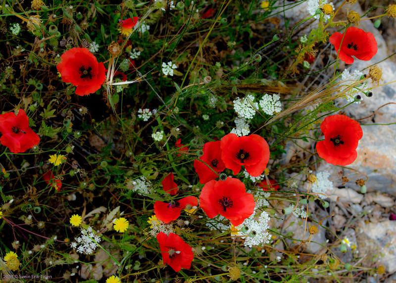 Poppies, Loutro