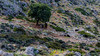The rocky path - and some goats