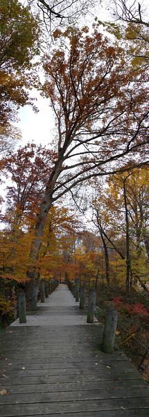 "Vertical panorama of a tree leaning over a path through the woods.<br /> View it in full resolution here: <a href=""http://photos.kevinworkman.com/Pictures/2011/i-83W6Gh2/0/O/TreePanorama5.jpg"">http://photos.kevinworkman.com/Pictures/2011/i-83W6Gh2/0/O/TreePanorama5.jpg</a>"
