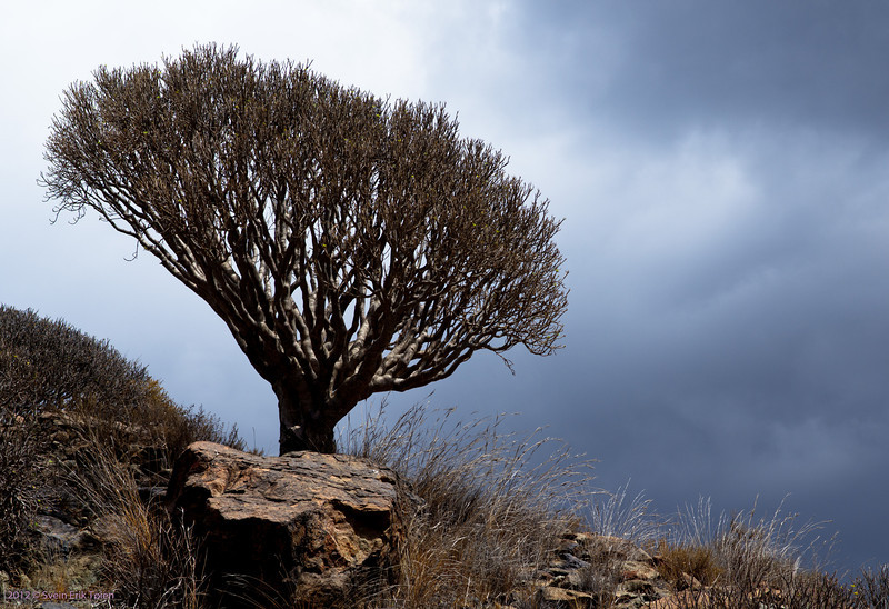 Tree on a hill<br /> Puerto Rico
