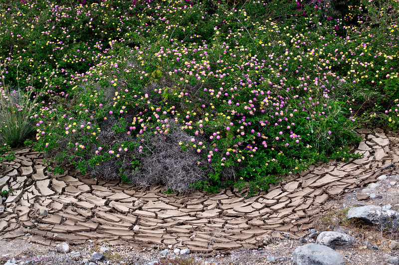 Water has dried up - flowers stay