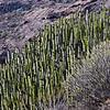 Hillside vegetation
