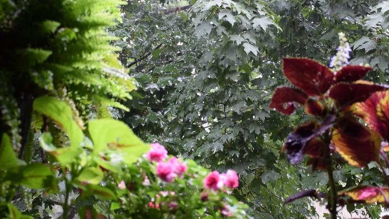 15 minutes of rain