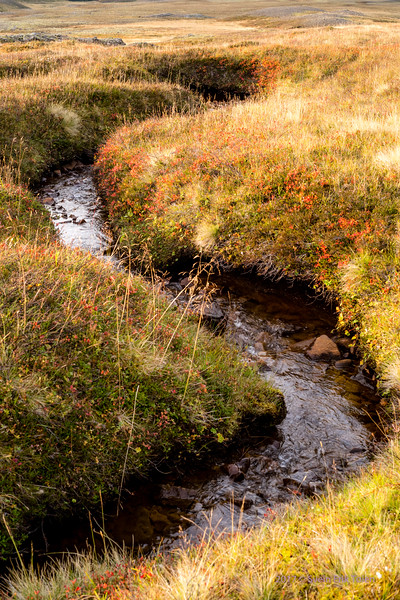 Small meander