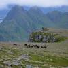 REINDEER AT SKOGSOYA<br /> We were told by many about elk hunting at Skogsoya, but Reindeer? The pack rapidly made their way when they discovered people – they were not very tame indeed. Anyway – the wiew of reindeer with the small town Myre making background was somehwhat special. <br /> <br /> REIN PÅ SKOGSØYA<br /> Mange har fortalt om elgjakt på Skogsøya, men rein? Flokken stakk raskt unna da de oppdaget folk – særlig tamme var de ikke. Det var nå litt underlig, å se reinflokken med Myre i bakgrunnen.