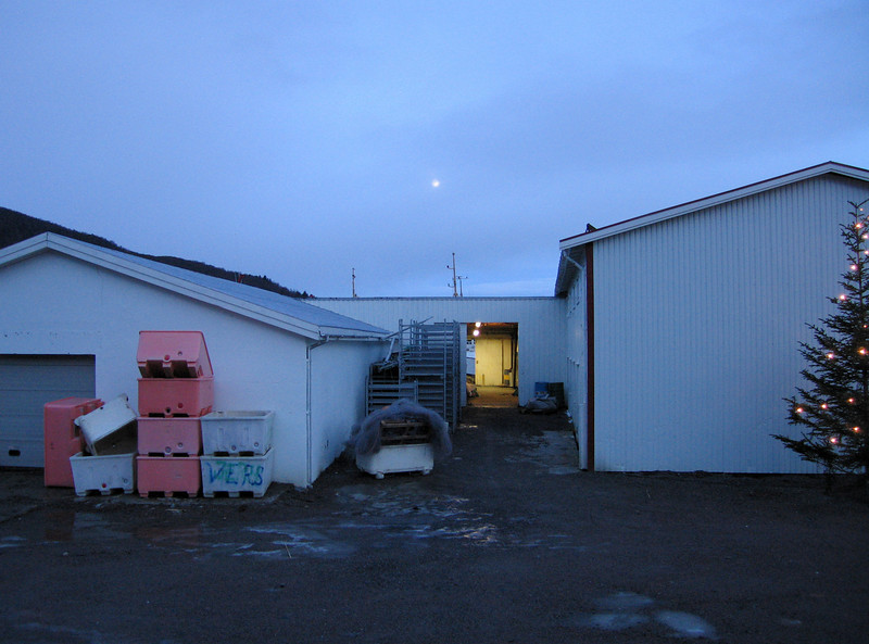 CHRISTMAS AT SOMMAROY<br /> A pale moon hangs over the fish reciecval at Sommaroy, Myre – chrismas stillnes for some days. The Christmas tree is decorated and the athmosphere is all peace. <br /> <br /> JUL PÅ SOMMARØY<br /> Blek måne over fiskemottaket på Sommarøy – det er julestille for noen dager. Juletreet er pyntet og freden har senket seg.